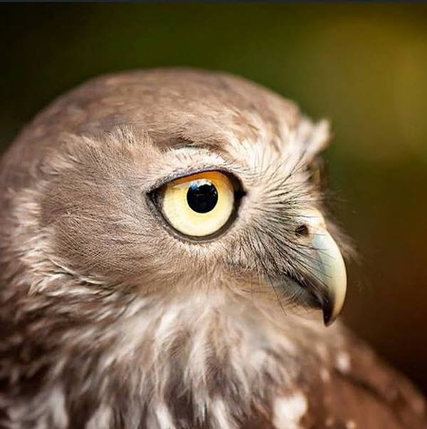Where to see birds in Queensland Zoos.