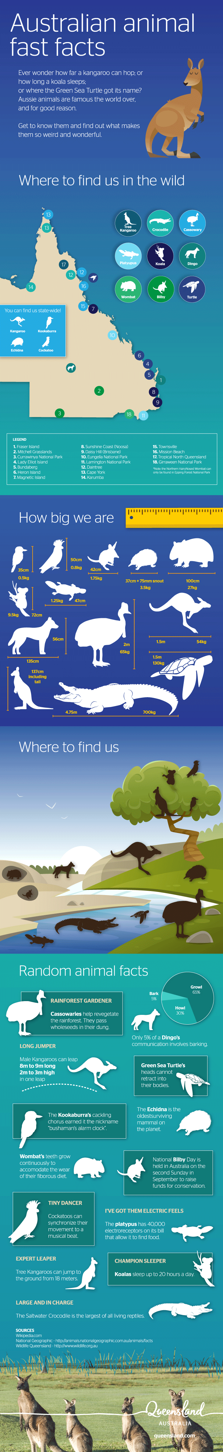 Animal Fun Facts Infographic