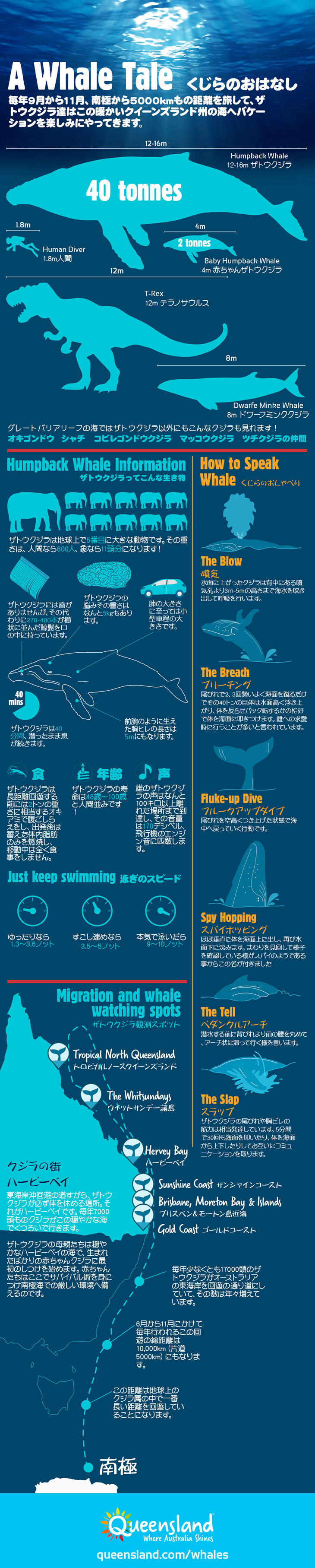 Whale Infographic